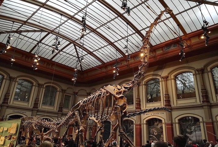 Brachiosaurusskelett im Museum für Naturkunde in Berlin