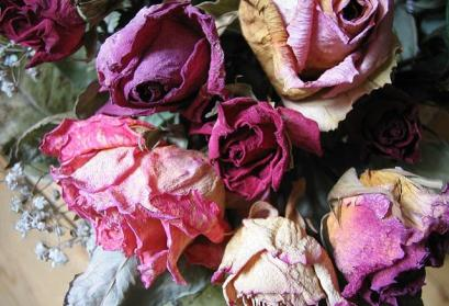 Trockenblumen (Rosen)